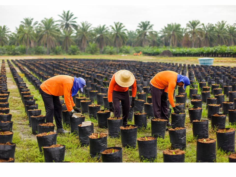 palm workers tending to plants